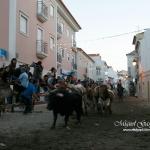 Recolha dos touros - Feira de Maio 2010