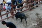 O arranque do touro - Feira de Maio 2010