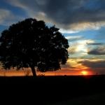 PDS e solitária árvore