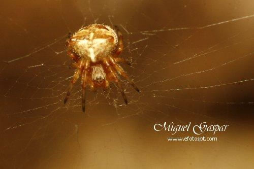 Tubo para macro - Aranha pequena